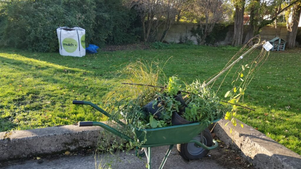Plants in wheelbarrow, ready to be planted on Friarsland green